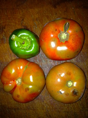 Accidental Locavore Tomatoes and a Pepper