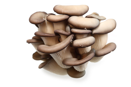 Accidental Locavore Oyster Mushrooms