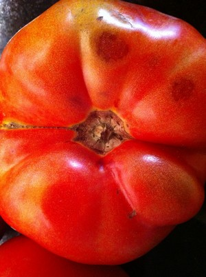Accidental Locavore Tomato Close Up