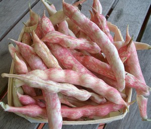 Accidental Locavore Fresh Cranberry Beans