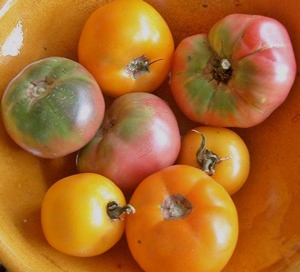 Accidental Locavore Heirloom Tomatoes - Copy