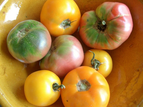 Accidental Locavore Heirloom Tomatoes