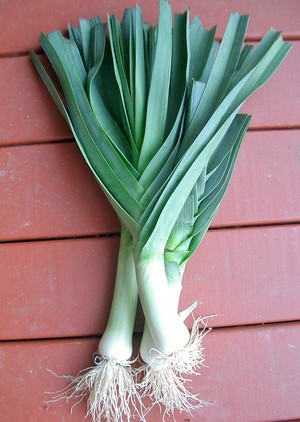 Accidental Locavore Leeks
