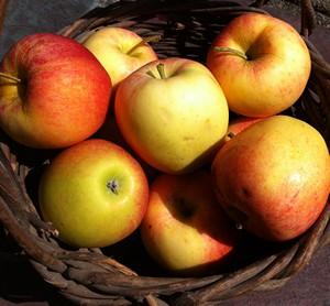 Accidental Locavore Gala Apples