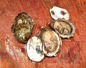 Accidental Locavore Kumo Oysters