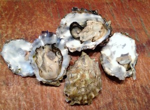 Accidental Locavore Pacific Oysters