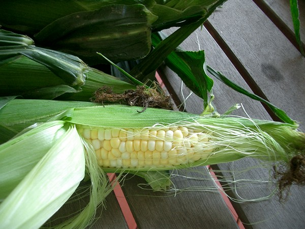Accidental Locavore Corn From Farmers Market
