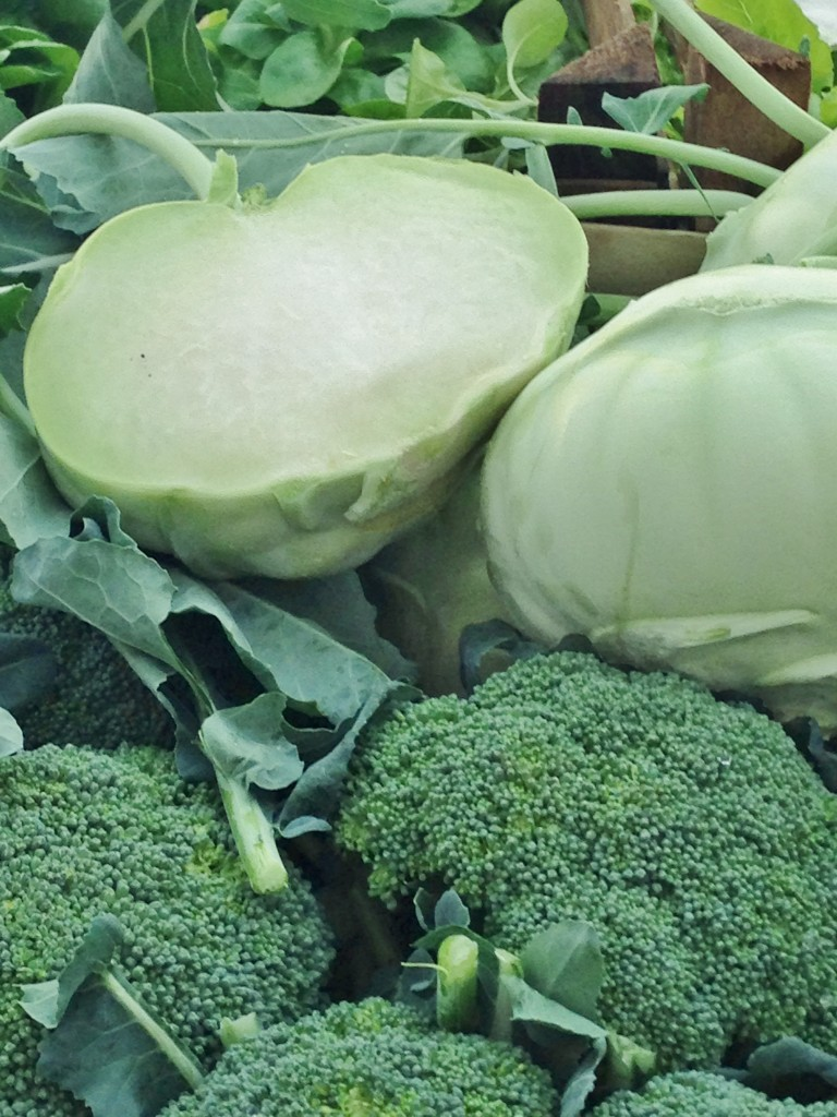 Accidental Locavore Broccoli and Kohlrabi
