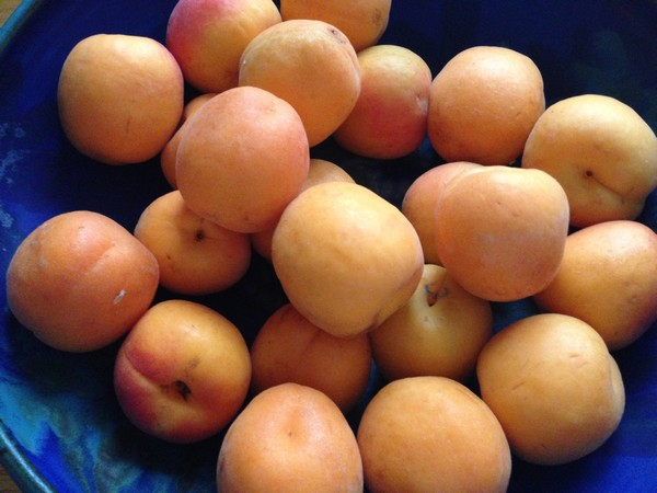 Accidental Locavore Apricots