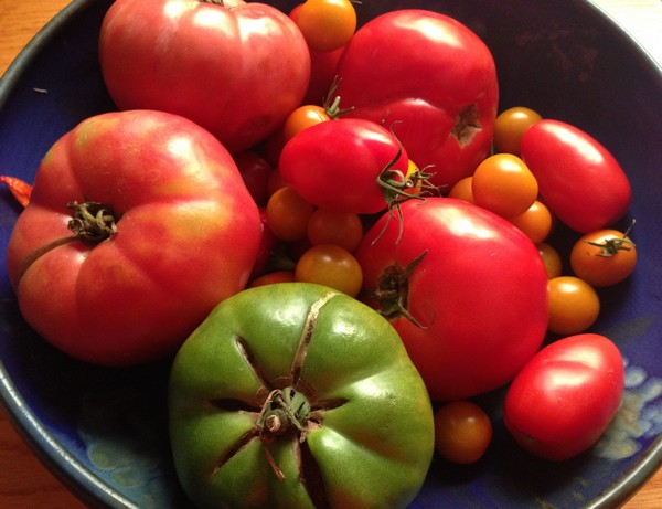 Accidental Locavore Tomatoes From Farmers Market