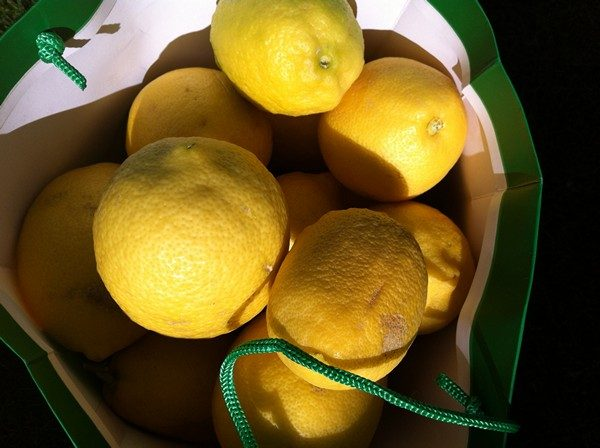 Accidental Locavore Lemons in a Bag
