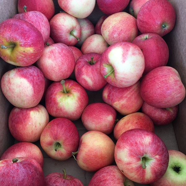accidental-locavore-farmers-market-apples