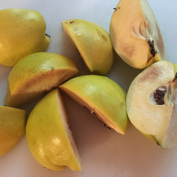 Accidental Locavore Quince for Chutney