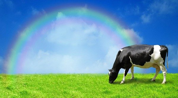 Accidental Locavore Skittles Rainbow