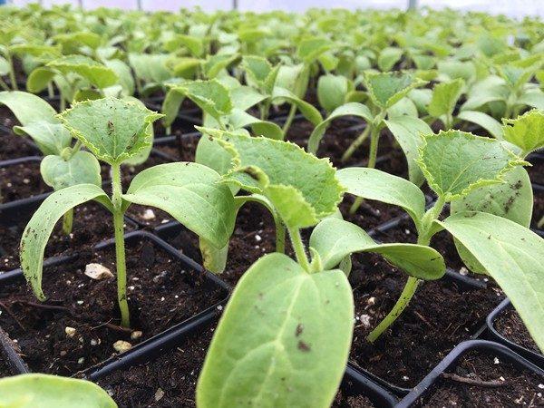 Accidental Locavore Farm Plants