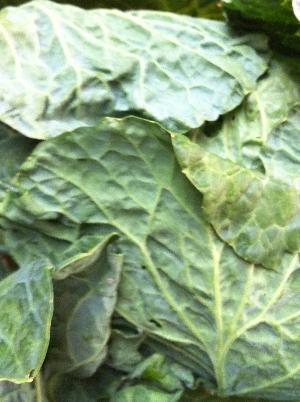 Accidental Locavore Cabbage Close Up