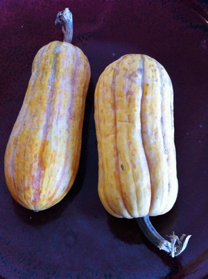Accidental Locavore Delicata Squash