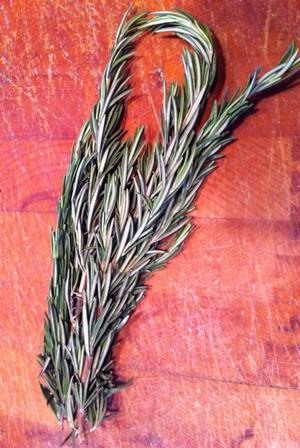 Accidental Locavore Rosemary