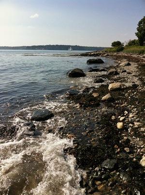 Accidental Locavore Maine Coast