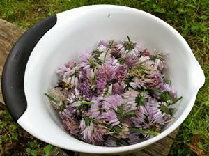 Accidental Locavore Chive Blossoms