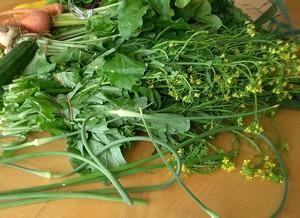 Accidental Locavore Garlic Scapes and Broccoli Rabe