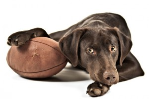Accidental Locavore Dog and Football