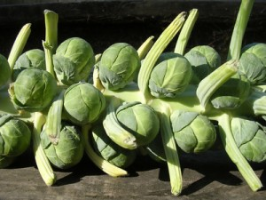 Brussels Sprouts and Pearl Onions in Horseradish Cream
