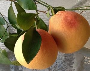 Accidental Locavore Two Grapefruit