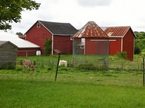 Accidental Locavore Wigsten Farm