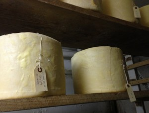Accidental Locavore Cheddars Aging