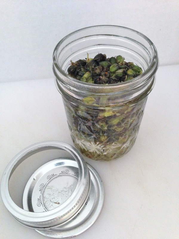 Accidental Locavore Dandelion Capers