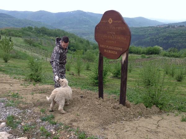 Accidental Locavore Truffle Plantation