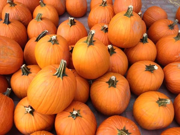 Accidental Locavore Pumpkins