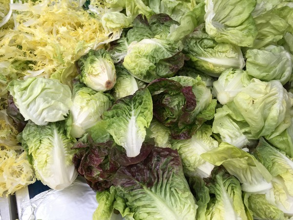 Accidental Locavore Lots of Lettuce