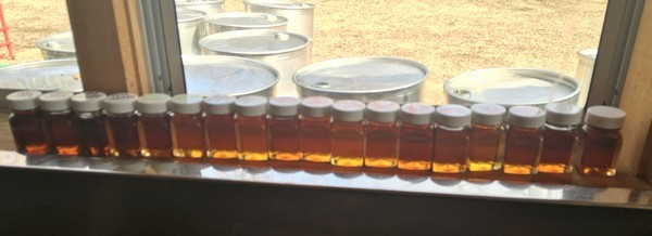 Accidental Locavore Maple Syrup Grades