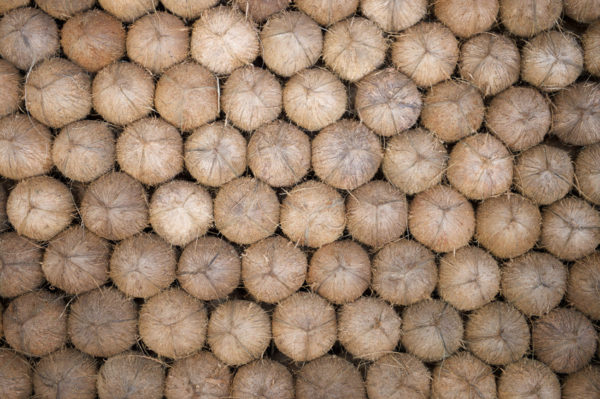 FancyFood Show Coconuts