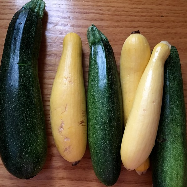 Accidental Locavore Zucchini and Squash